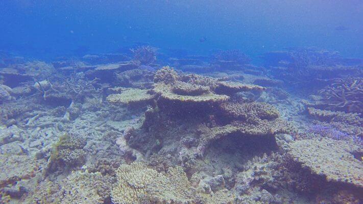 korall blog kép 3