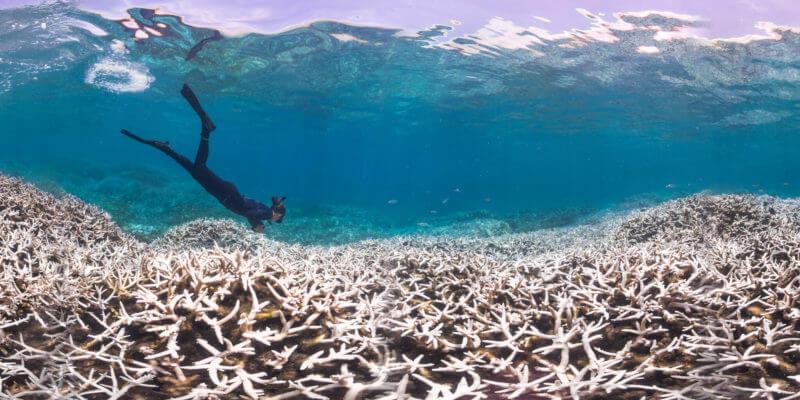 korall blog kép 5