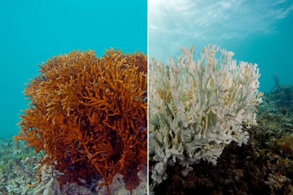 Korall blog kép 1