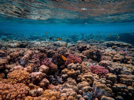korall blog kép 2