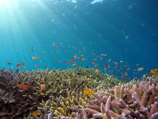 korall blog kép 4